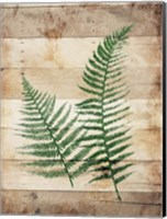 Ferns On Wood Fine-Art Print