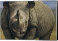 Rhinos Fine-Art Print