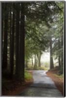 Forest Road Fine-Art Print