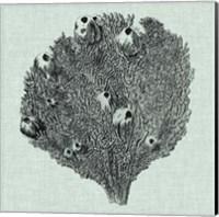 Serene Coral IV Fine-Art Print