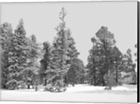Forest Freeze BW Fine-Art Print