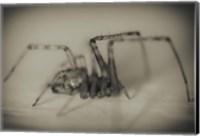 Spider 2 Fine-Art Print