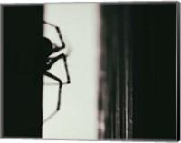 Spider 3 Fine-Art Print