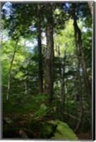 Green Forest Vertical Fine-Art Print