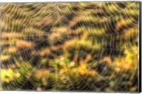 Morning Web Fine-Art Print