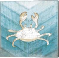 Coastal Crab Fine-Art Print