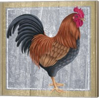Chicken 1 Fine-Art Print
