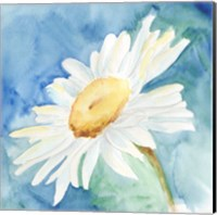 Daisy Sunshine I Fine-Art Print