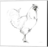 Rooster II Dark Square Fine-Art Print