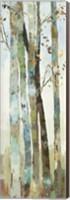 Towering Trees I Fine-Art Print