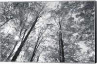 Autumn Forest III BW Fine-Art Print