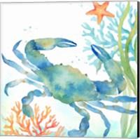 Sea Life Serenade II Fine-Art Print