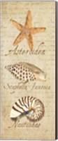 Oceanum Shell Panel Beige II Fine-Art Print