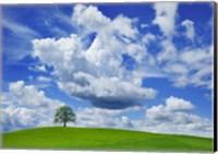Oak and clouds, Bavaria, Germany Fine-Art Print