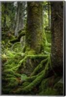 Ancient Forest Fine-Art Print