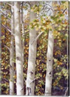 Aspen Quartet Fine-Art Print