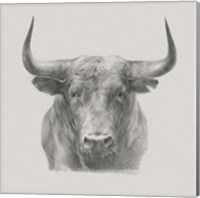 Black Bull Fine-Art Print