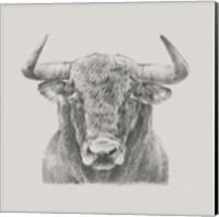 Black & White Bull Fine-Art Print