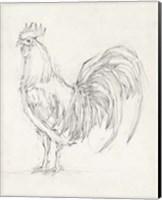 Rooster Sketch II Fine-Art Print