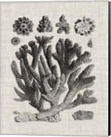 Coral Specimen IV Fine-Art Print