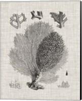 Coral Specimen VI Fine-Art Print