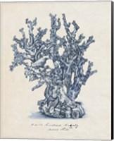 Sea Coral Study IV Fine-Art Print