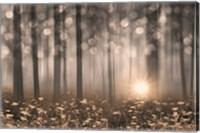 Enchanted Morning Fine-Art Print