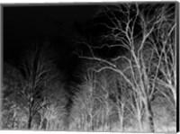 Branches Fine-Art Print