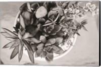 Top View Succulents Fine-Art Print