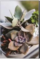Colorful Succulents Fine-Art Print