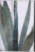 Cactus Close View Fine-Art Print