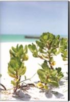 Sand Succulents I Fine-Art Print