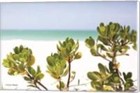 Sand Succulents II Fine-Art Print
