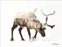 Arctic Reindeer Fine-Art Print