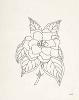 Gardenia Line Drawing Fine-Art Print