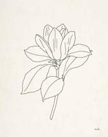 Magnolia Line Drawing Fine-Art Print