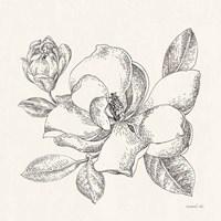 Flower Sketches II Fine-Art Print