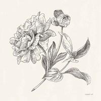 Flower Sketches I Fine-Art Print