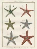 Histoire Naturelle Starfish II Fine-Art Print
