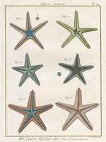 Histoire Naturelle Starfish I Fine-Art Print