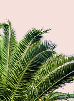Tropical Leaves on Blush I Fine-Art Print