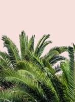 Tropical Leaves on Blush II Fine-Art Print
