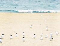 Relaxed Seagulls Fine-Art Print