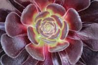 Bright Succulent Fine-Art Print