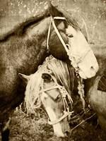 Vintage Horses Fine-Art Print