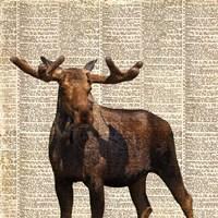 Country Moose I Fine-Art Print