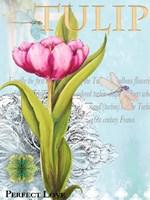 Elegant Tulip I Fine-Art Print