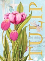 Elegant Tulip II Fine-Art Print