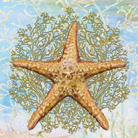Shell Medley II Fine-Art Print