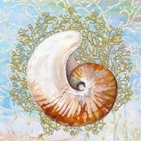 Shell Medley III Fine-Art Print